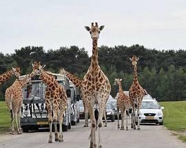 safari pic